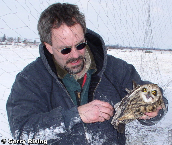 image of Chuck Rosenberg afixing a Short-eared Owl with a telemetry monitor
